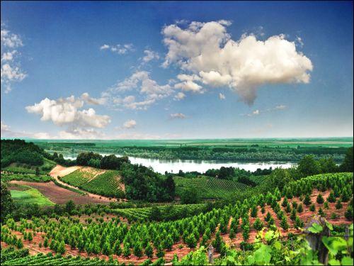 fruska-gora-sremski-karlovci-vinogradi